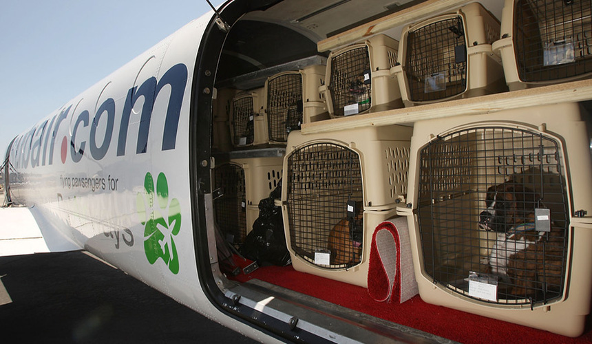چطور برای حیوانات خانگی بلیط هواپیما بخریم؟
