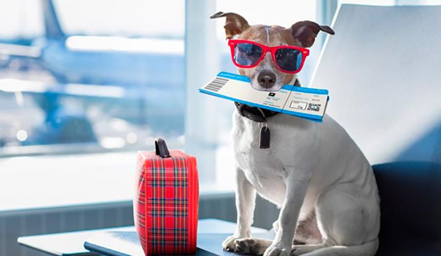 چگونه برای حیوانات خانگی خود بلیط هواپیما بخریم؟