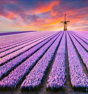 در سفر به هلند این چند کار را انجام دهید