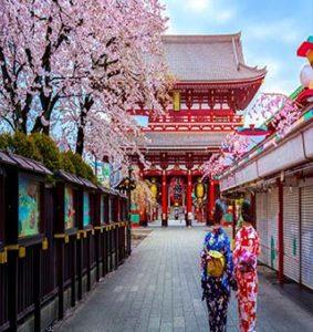 تماشای رقص شکوفههای گیلاس؛ در تور ژاپن