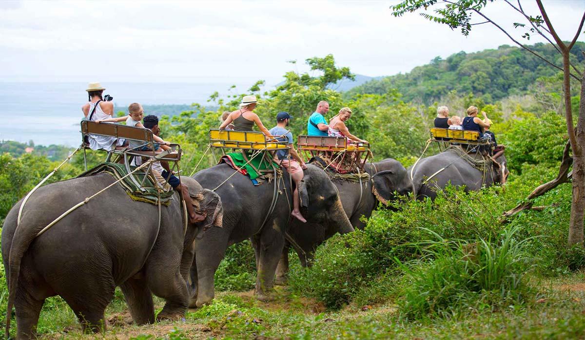 فیل سواری - پوکت