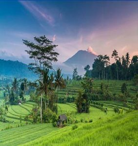 هتل دلخواه خود را در بالی انتخاب کنید
