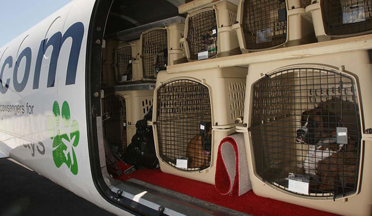 حمل حیوانات خانگی در پرواز