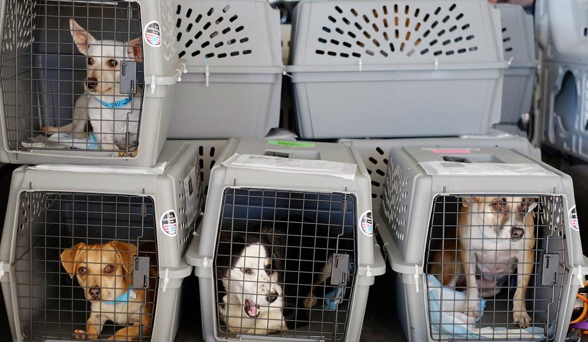 حمل حیوان در هواپیما