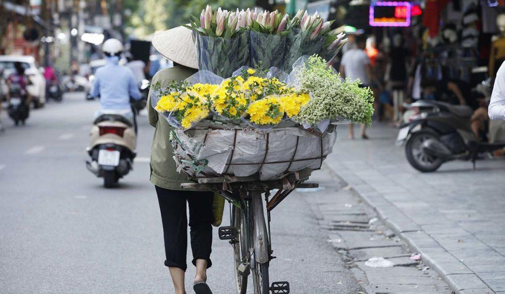 جاذیههای هانوی