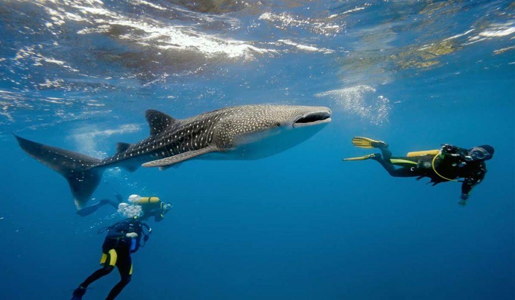 شنا در مالدیو