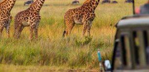 ماجراجویی هیجانانگیز در پیلانسبرگ، آفریقای جنوبی