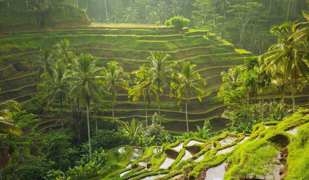 اوبود بالی
