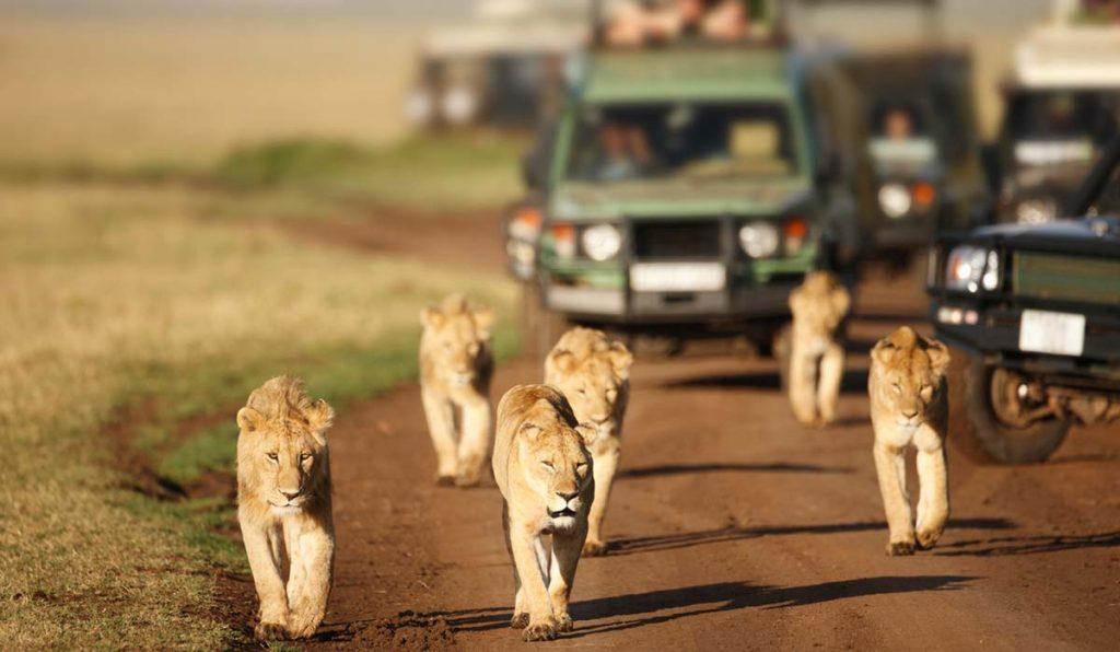 بهترین فصل سفر به آفریقای جنوبی