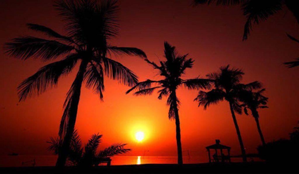 ساحل درختان نارگیل کیش
